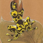 Artbook femmes animales sexy Thib illustrateur grenouille